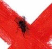 Detalle de la mosca de la portada de La novia gitana
